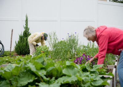 Scott-Farrar senior living residents tending to the garden
